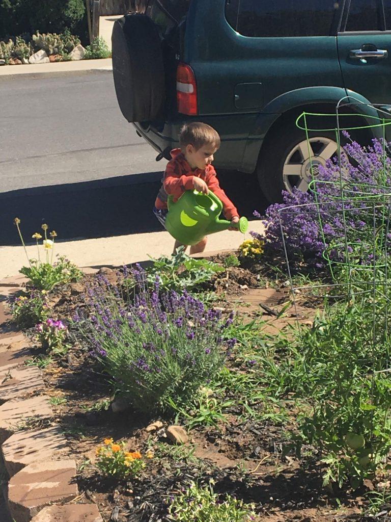 Lucas, the Gardener