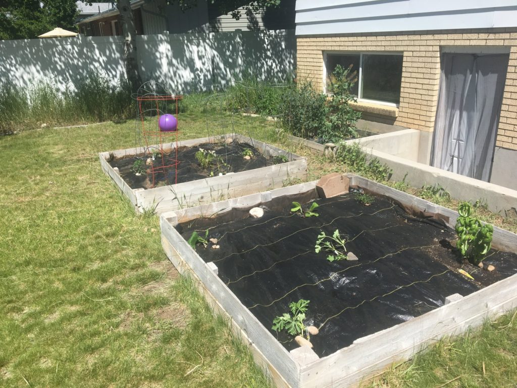 2019 Garden finally Goes In