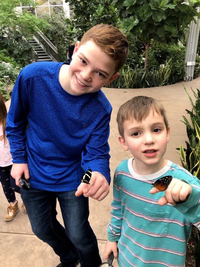 Boys at the Butterfly Museum
