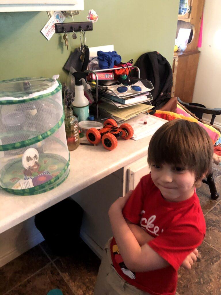 Lucas's Birthday Week: Butterflies Step Three