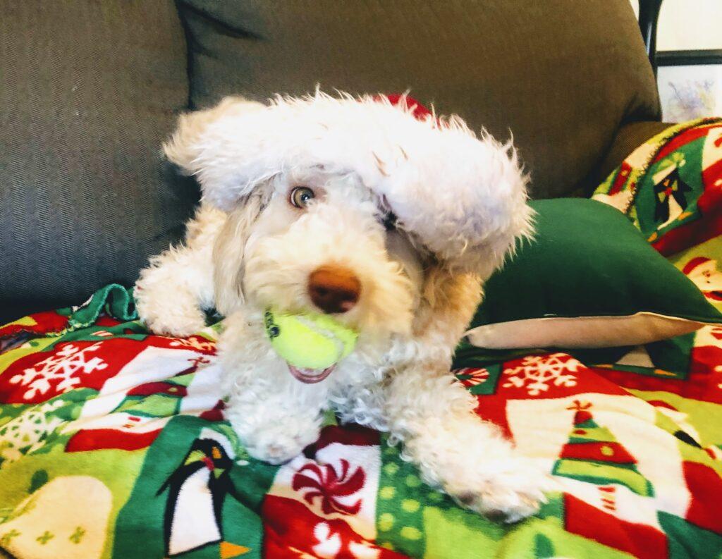 Luna: Christmas Photo Attempt